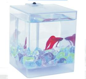 Sell Aqua Box Betta