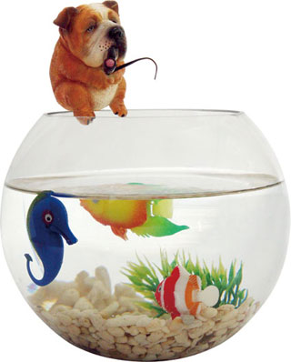 Fish bowl-Take a break-featured aquarium