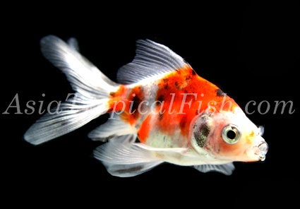 Fish News - Offer Fish - PetsGlobal com