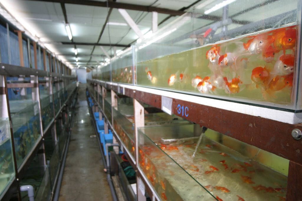 Fish Manufacturers & Suppliers - Fish Catalog - PetsGlobal com
