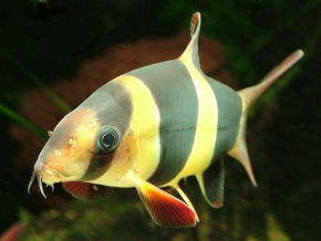 Tropical Fish Manufacturers & Suppliers - Tropical Fish