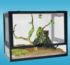 PT GLASS PET TERRARIUM