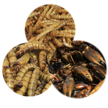 Dried Insects
