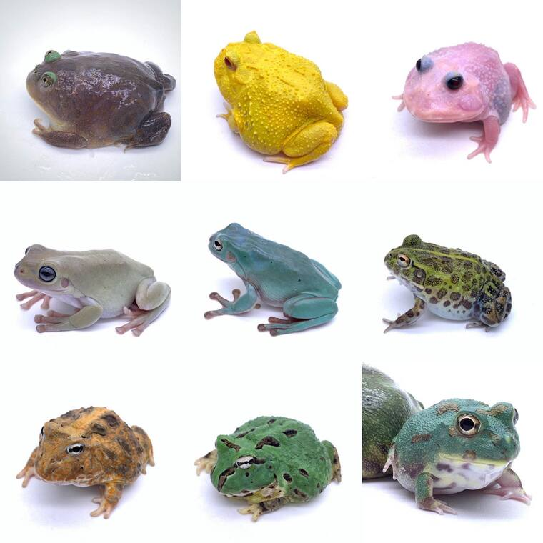 Other Frogs