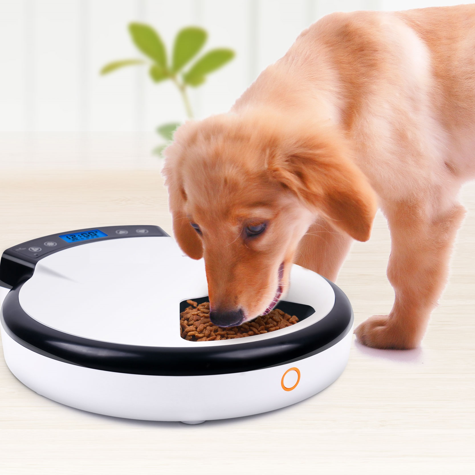 Automatic feeders for cat and dog