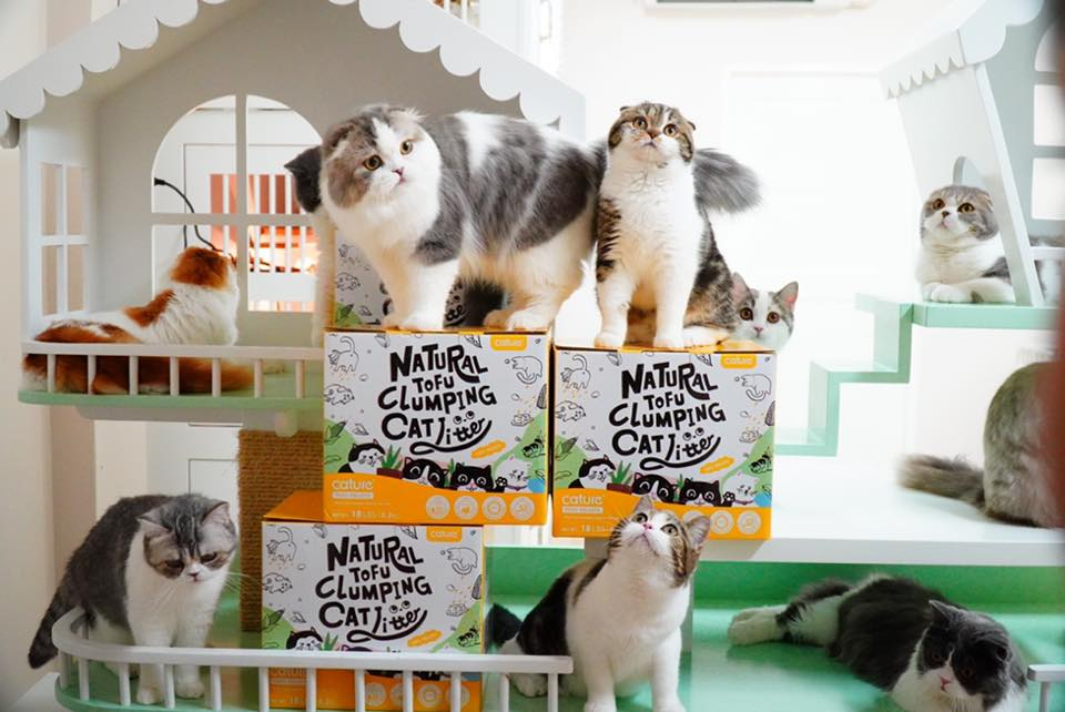natural cat litter , natural wood clumping cat litter, best natural cat litter, healthy cat litter
