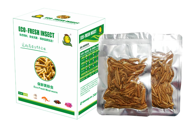 Eco fresh mealworm supplier For Fish and Reptiles/Chicken/Bird/Turtles Etc