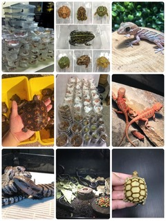 Reptiles,Amphibians,Invert export to worldwide.