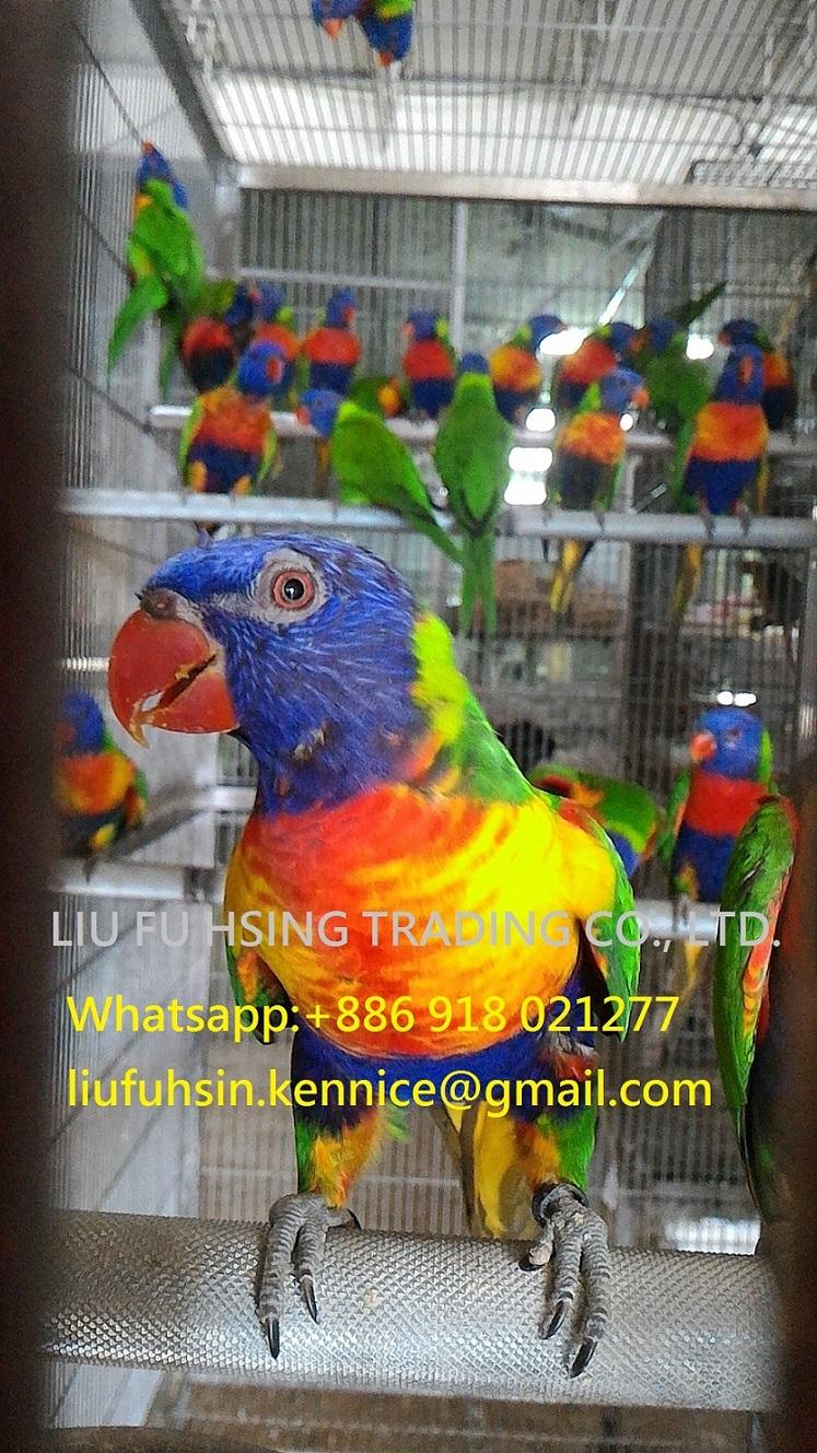 Birds Manufacturers & Suppliers - Birds Catalog - PetsGlobal com