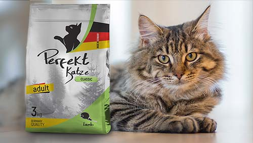Dry & Wet Food for Cats | Lamb, Chicken, Salmon, also for Kitten and Sterilized cats