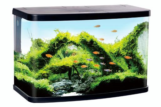 Vision Aquarium
