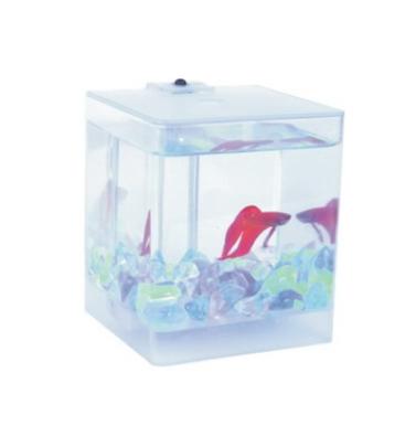 Aqua Box Betta