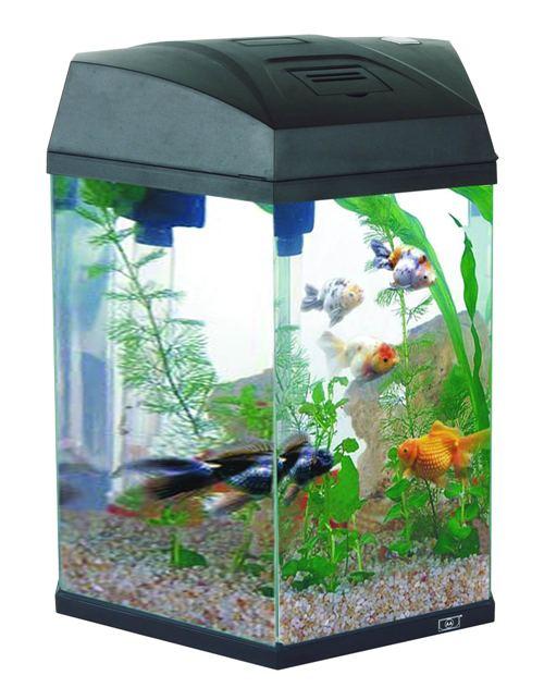Aquarium tanks furniture catalog aa aquarium for Kampffisch aquarium