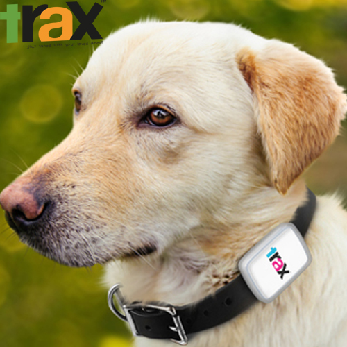 Trax GPS - the world�s smallest & lightest, real-time GPS tracker for pets.
