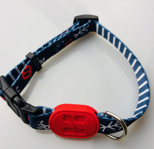 Fashion  Dog collar for Teddy Samoyed Matching Leash & Harness Available Separately