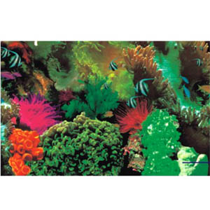 aquarium background paper Selecting a background for your freshwater tank what type of aquarium background you want or any other kind of paper to create your own background.