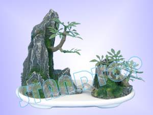Small Bonsai