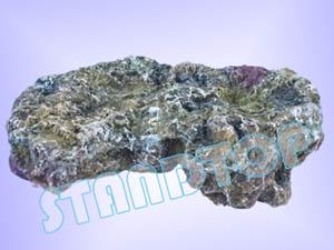 Coral Reef Rock