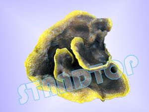 Sell Imitation Hard Coral