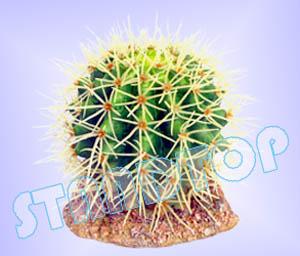Cactus ( Ball )
